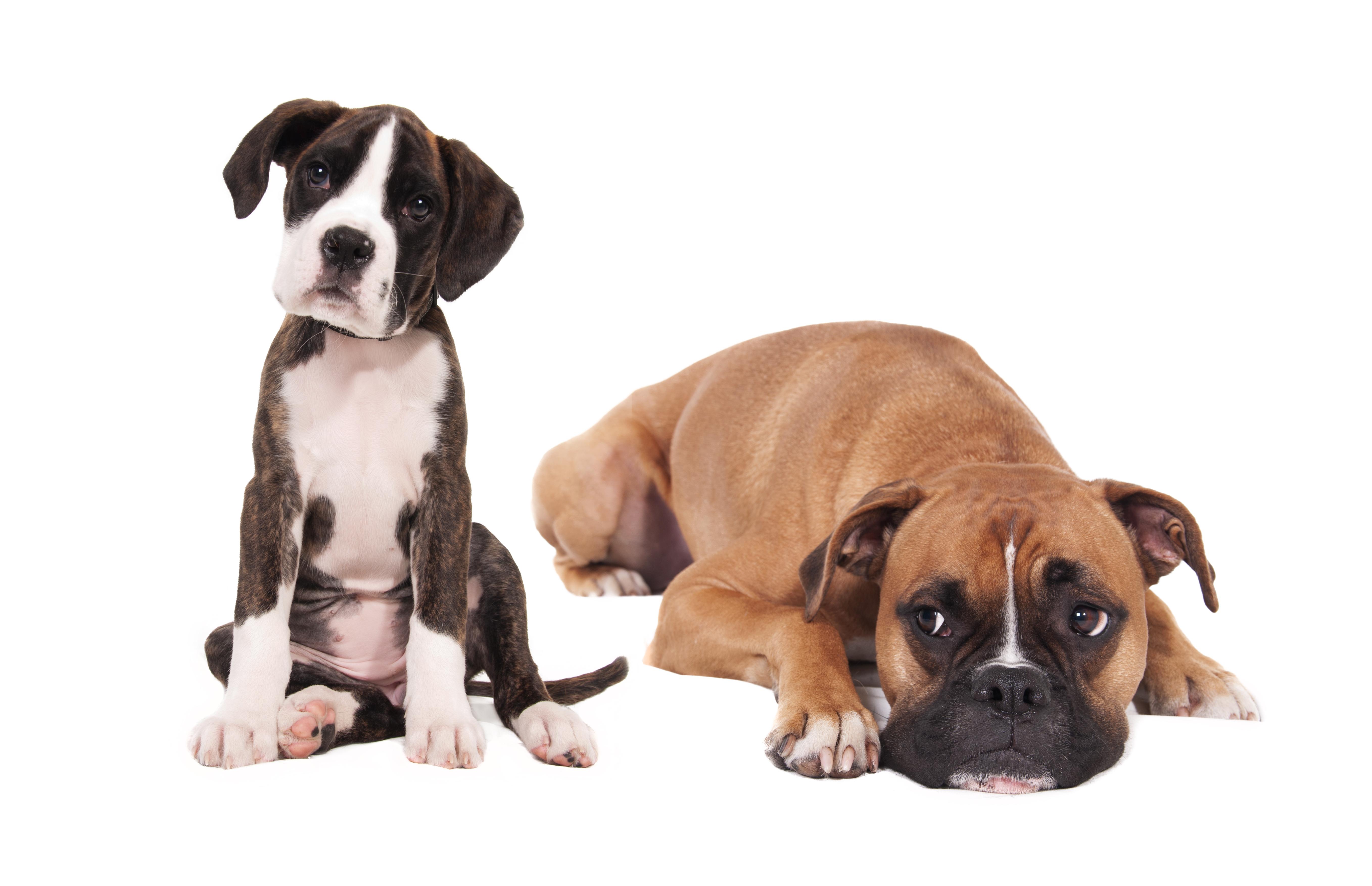 Diverse hundelenker