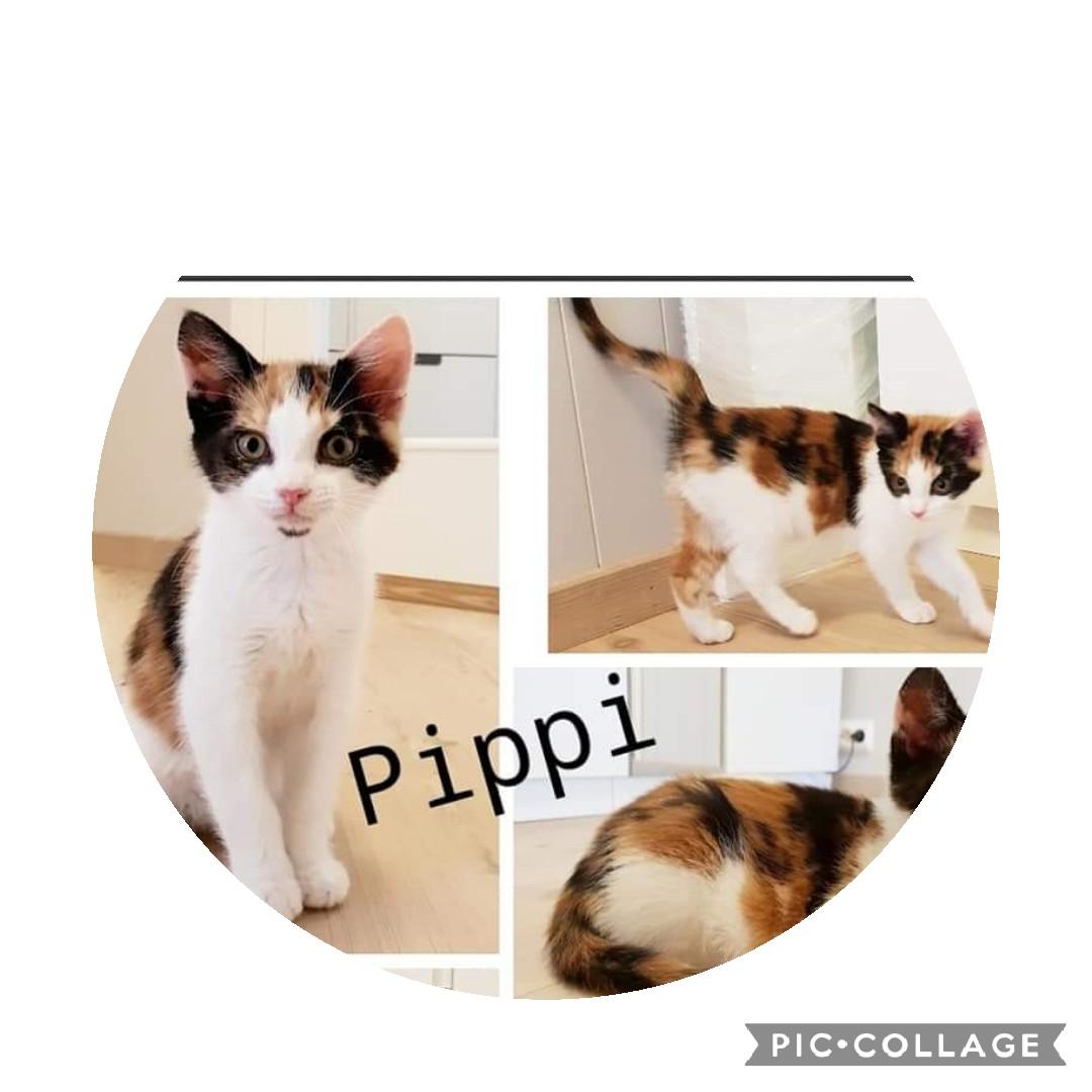 Pippi leter etter drømmehjemmet 💞